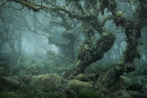 Mystical Photos of the Enchanting English Forests of Wistman's Wood