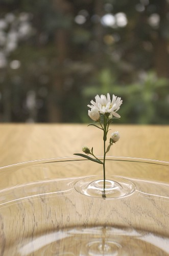 Amazing Illusions of Single Flowers Defying Gravity