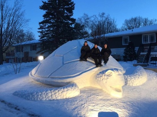 Minnesota Brothers Sculpt 12-Foot Sea Turtle from Snow on Front Lawn