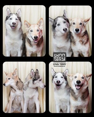Photo Booth for Dogs Reveals the Playful and Compassionate Nature of All Breeds