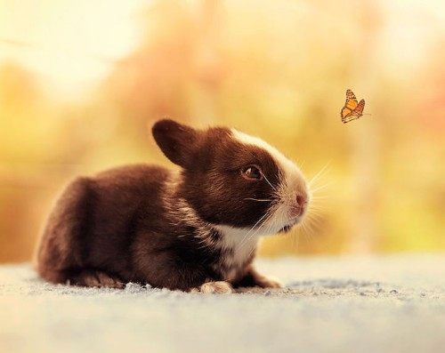 Photographer Captures the Adorable First Weeks of a Baby Bunny's Life
