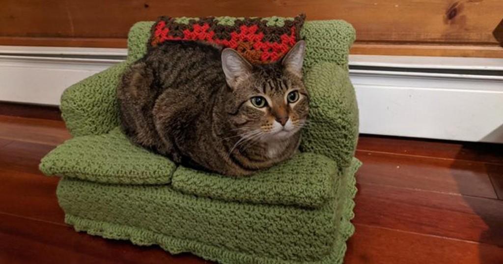 Gatos  - cover