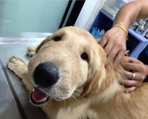Happy Dog Can't Stop Smiling, Even After Being Stung