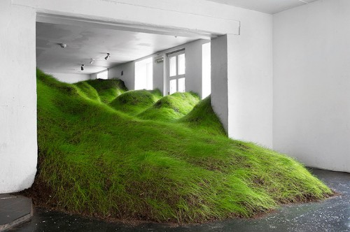 Luscious Green Grass Fills Gallery with Gentle Rolling Hills