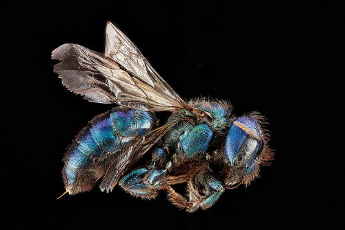 Macro Photos of Bees Showcase Stunning Natural Detail