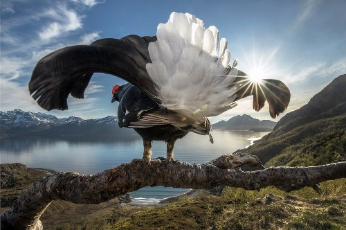Winners of the BigPicture Natural World Photography Competition
