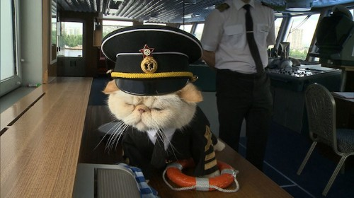 Cat Wearing a Tiny Captain's Outfit is the Cutest Sailor Onboard a Russian Cruise Ship