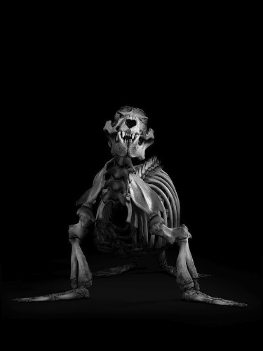 Skeletal Fine Art Focuses on the Evolution of Animals