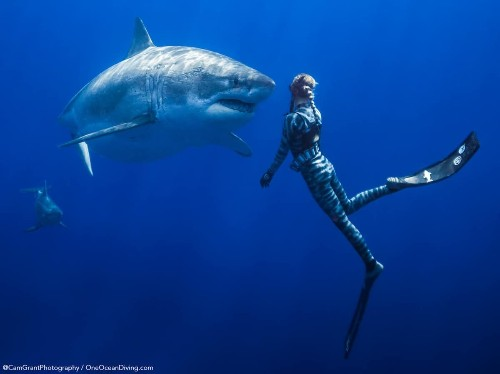 Conservationists Swim with One of the Largest Great White Sharks Ever