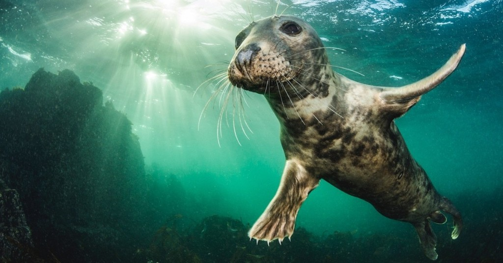 British Wildlife Photography Awards Celebrates 10 Years of Amazing Animal Photos