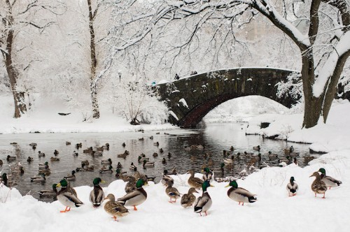 New York City's Central Park Covered in Snow