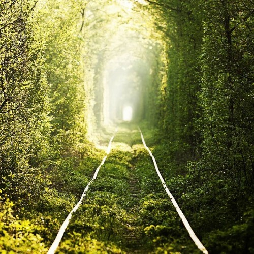 "Foliage Covered ""Tunnel of Love"" is an Enchanting Pathway for Lovers"