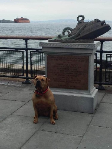 Staten Island Octopus Attack Statue Pops Up and Fools People Into Thinking It Really Happened