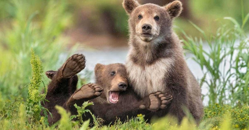 Hilarious Finalists of the 2020 Comedy Wildlife Photography Awards