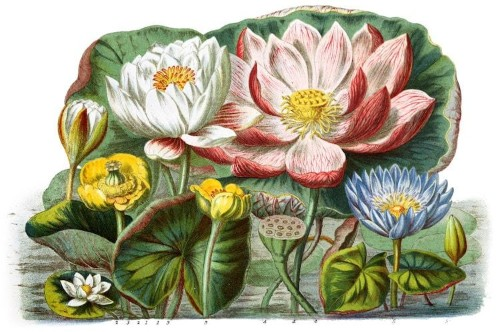 Designer Restores 19th-Century Botanical Catalog and Places It Online