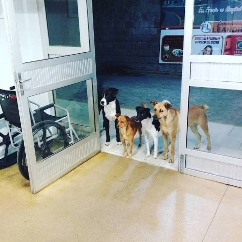 Loyal Dogs Wait for Owner at Hospital Where He Was Being Treated