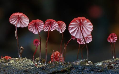 Rare Mushroom Photos Reveal the Visual Diversity of Fungi