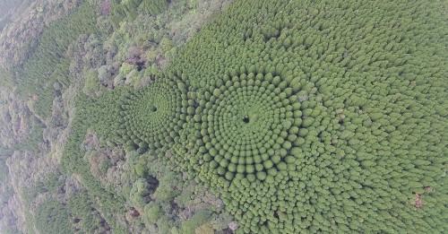 ¿Por qué aparecieron estas formas circulares en un bosque en Japón?