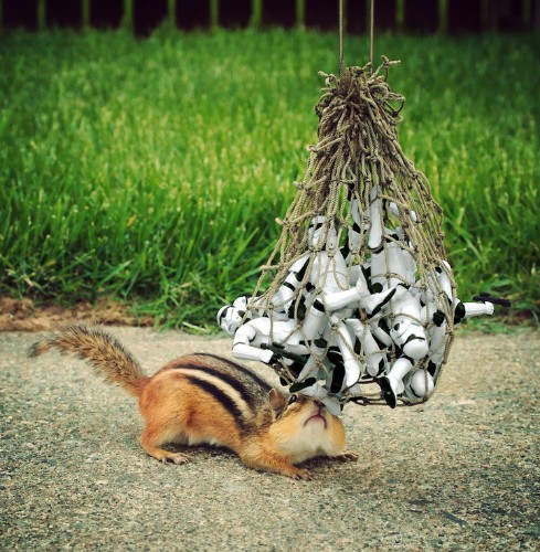 """Cute Chipmunks Playfully Interact with """"Star Wars"""" Toys"""