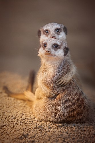 18 Adorable Photos of Animals Caught in a Warm Embrace