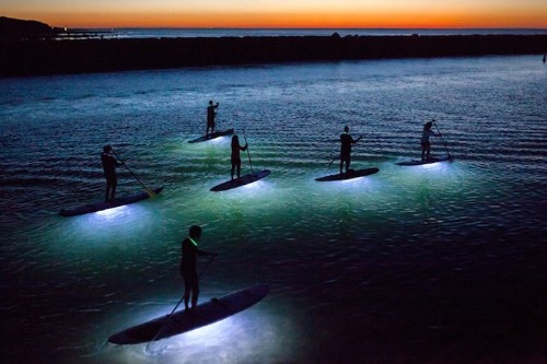 Beautiful Photos of Paddle Boarders at Night