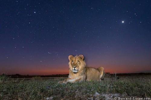 Ingenious Camera Traps Capture Striking Photos of African Animals at Night