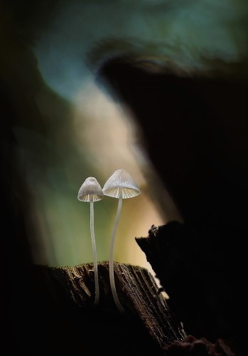 Mystical Photos of Mushrooms Casting an Enchanting Glow