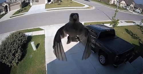 What Happens When a Bird's Wings Sync Up Perfectly with a Camera's Frame Rate