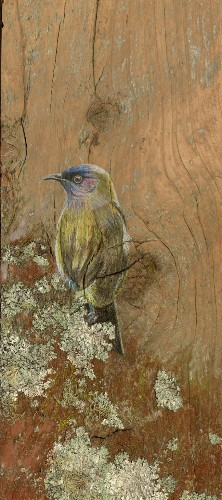 Rustic Portraits of New Zealand Birds Drawn on Recycled Timber