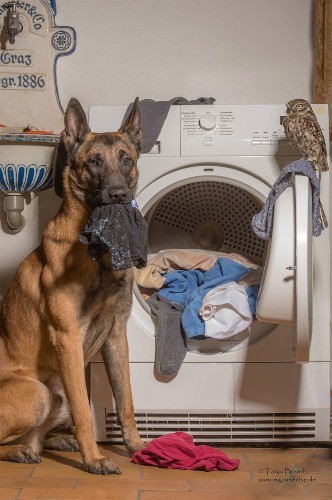 Heartwarming Photos of the Amazing Friendship Between a Dog and an Owl
