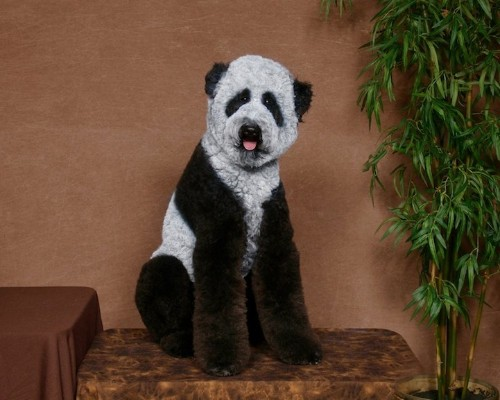 Dog Owners Transform Their Pets Into Outrageous Characters