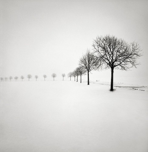 Quiet Winterscape Photos Capture the Stillness of Trees in Freshly Fallen Snow