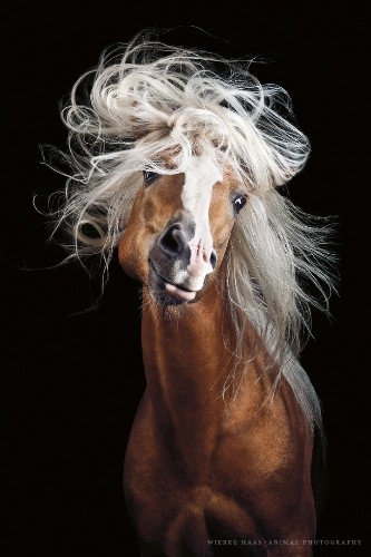Photographer Captures the Wild Beauty and Elegance of Horses