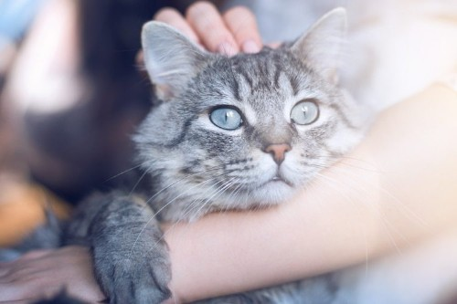Here's the Right Way to Hold Your Cat, According to a Helpful Vet