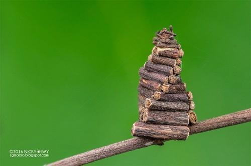 Macro Photos Capture the Hidden World of Nature's Smallest Architects