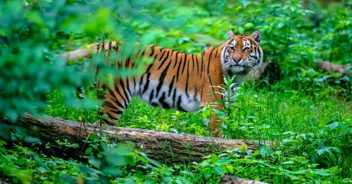 The Wonderful Animal Kingdom - cover
