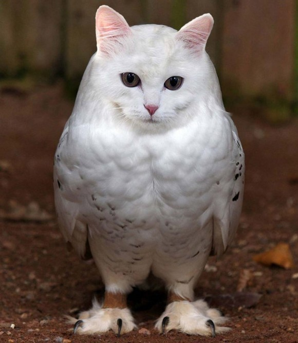 "Cat and Owl Combine to Form the Adorably Bizarre ""Meowl"""