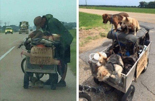 Animal-Loving Homeless Man Devotes Time and Energy to Caring for Stray Dogs