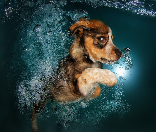 Playful Photos of Adorable Puppies Swimming Underwater