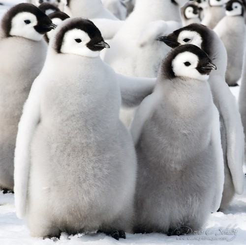 21 Adorable Photos of Animals Surrounded by the Snow