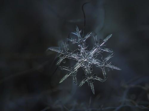 Beautiful Macro Photos of Snowflakes as Free Wallpapers