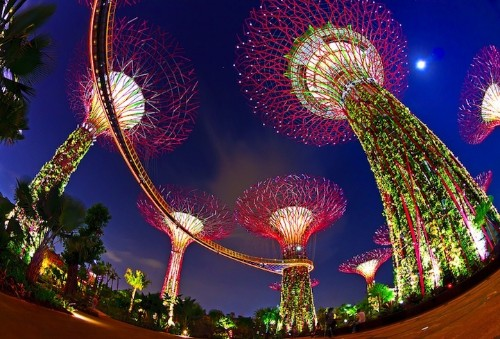 Surreal Photos of Singapore's Solar-Powered Supertrees