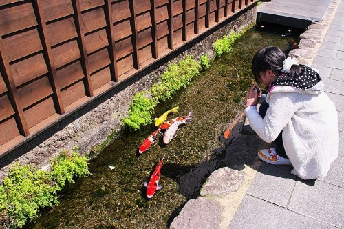 Colorful Koi Fish Swim in This Japanese City's Street Drainage Channels