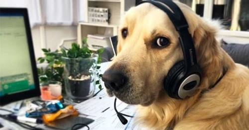 """""""Dogs Working From Home"""" Instagram Account Shares Adorable Photos of Everyone's New Furry Coworkers"""
