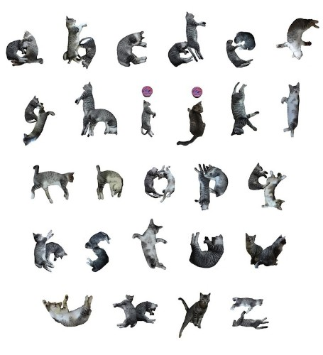 Playful Font Transforms Words into Adorable Cat Poses