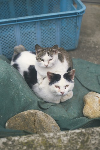 A Japanese Island Overrun by Hundreds of Stray Cats