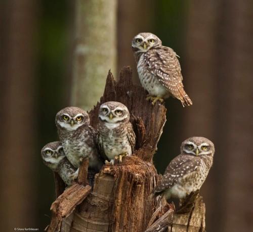 Winners of Wildlife Photographer of the Year 2014