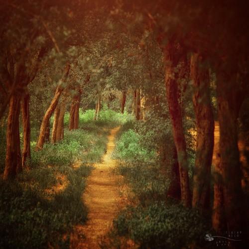 Beautifully Enchanting Pathways in Nature