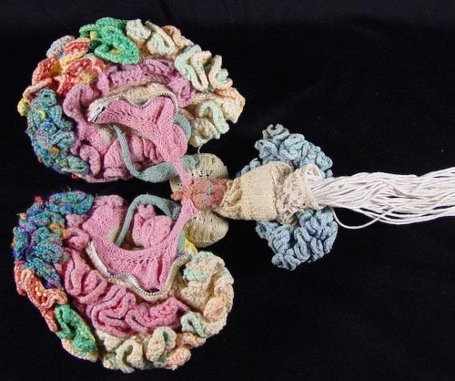 Psychiatrist Hand-Knits an Anatomically Correct Replica of the Human Brain