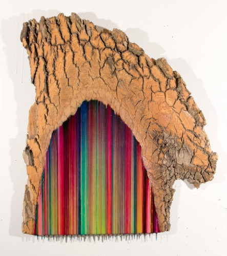 Vibrant Paintings on Cross-Sectioned Trees Made Using Ballpoint Pen